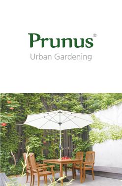 Prunus - Urban Gardening